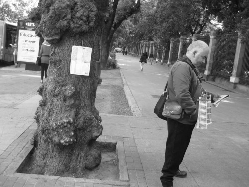 Lottery Seller, Paseo del Prado, Madrid