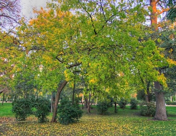 Autumn in Madrid's Retiro Park