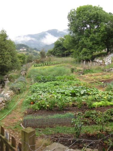 Vegetable Patch, Posada Del Valle, Asturias