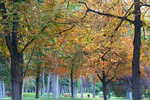 Madrid's Retiro Park, Autumn Leaves